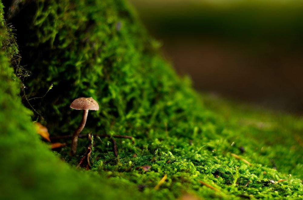 white and brown concrete mushroom