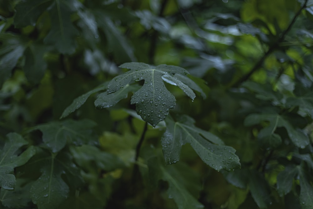 wet green leaf plant