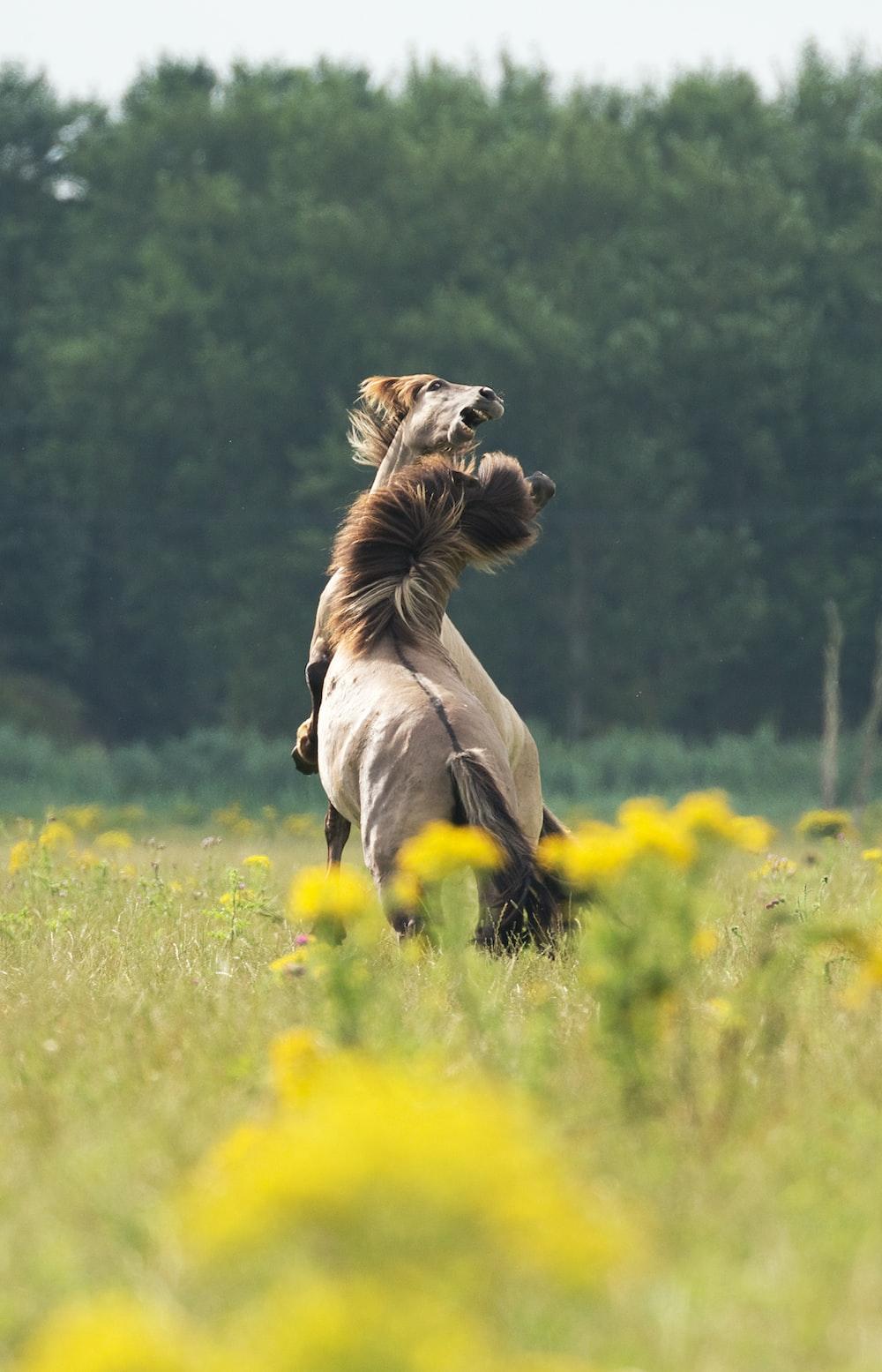 brown horse standing on flower field
