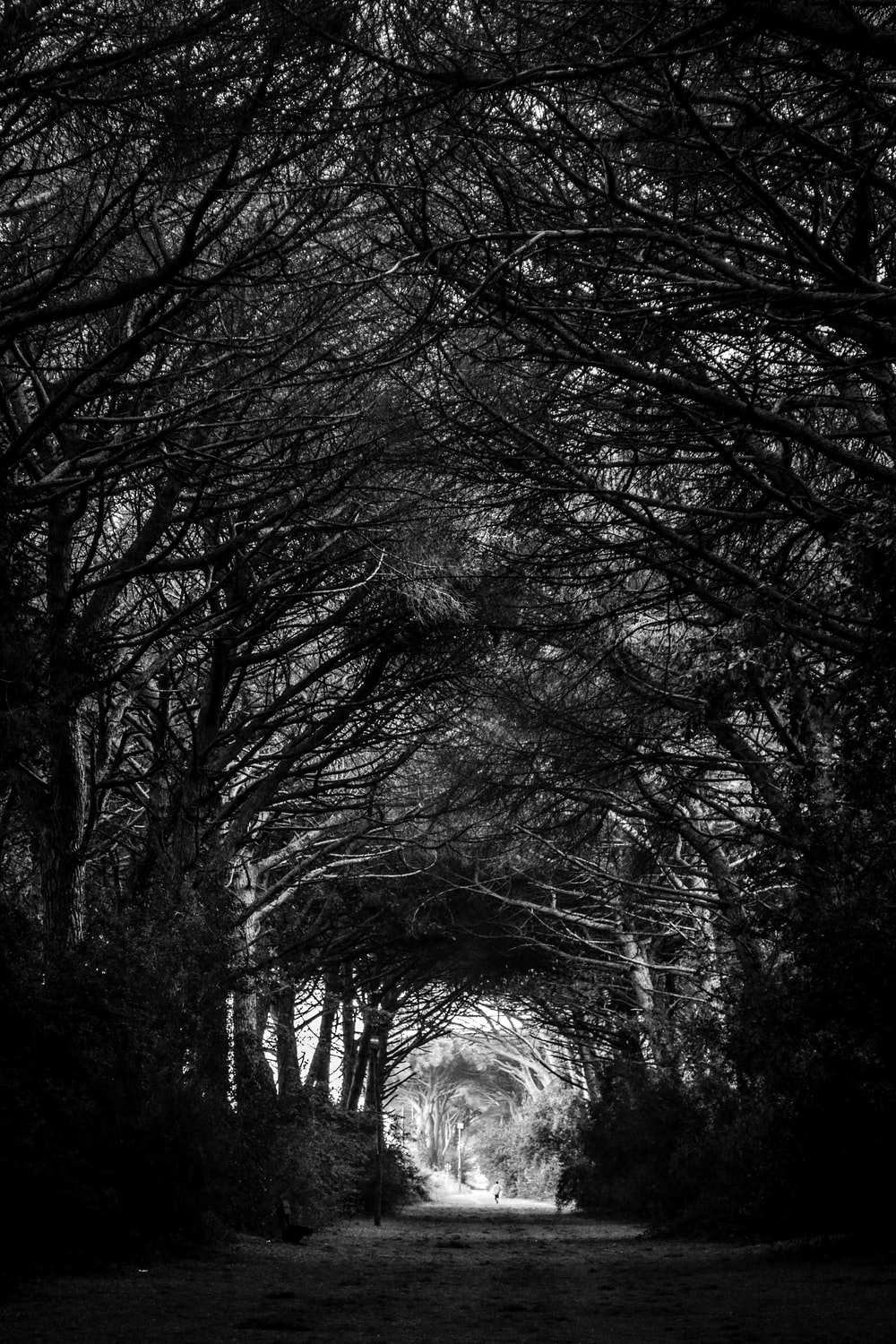 grayscale road in between trees