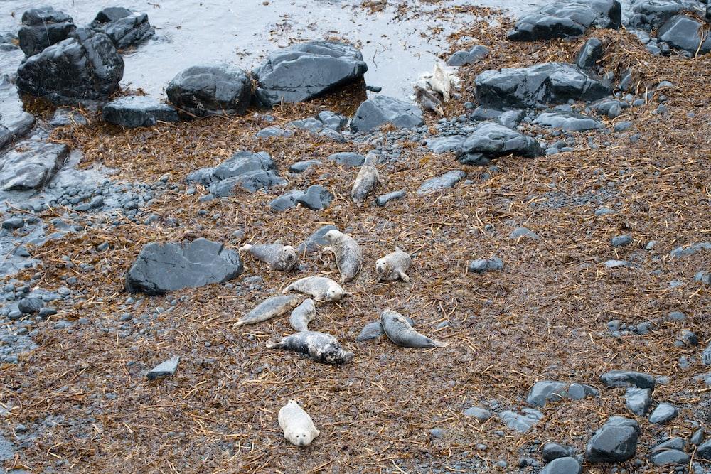 black seashore rock during daytime