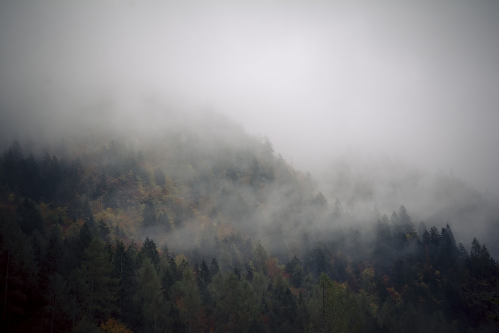green forest covered with fogs
