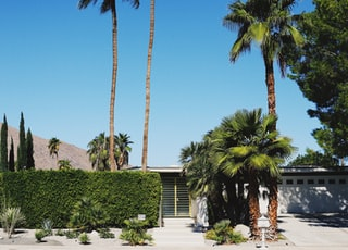 house near bushes and green coconut trees during daytime