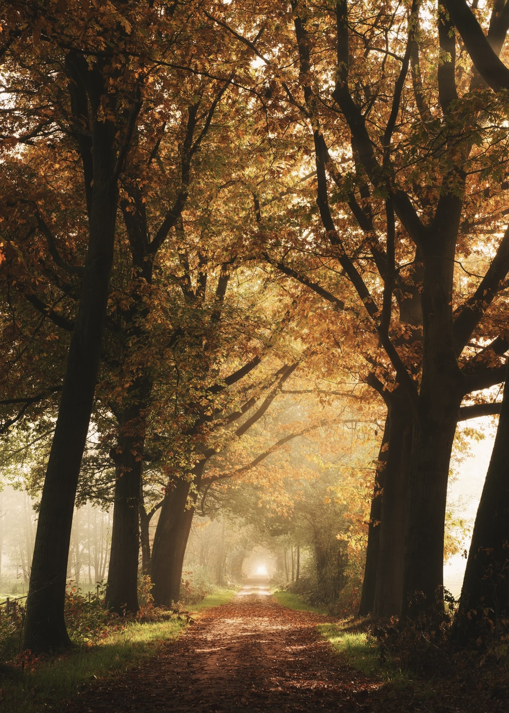 yellow leafed trees and pathway