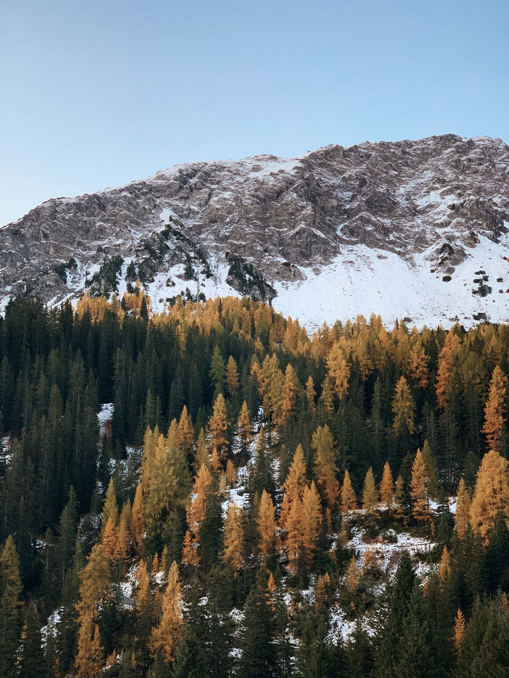 mountain covered with snow and trees during daytime