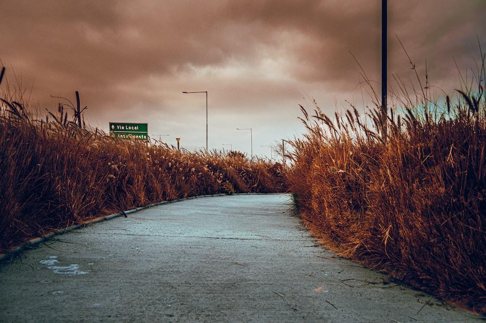 gray asphalt road between brown grass field under gray cloudy sky during daytime