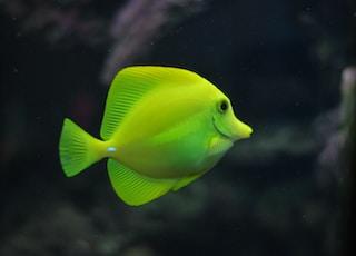 shallow focus photo of green fish