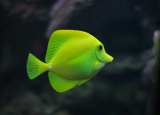 shallow focus photo of green fish