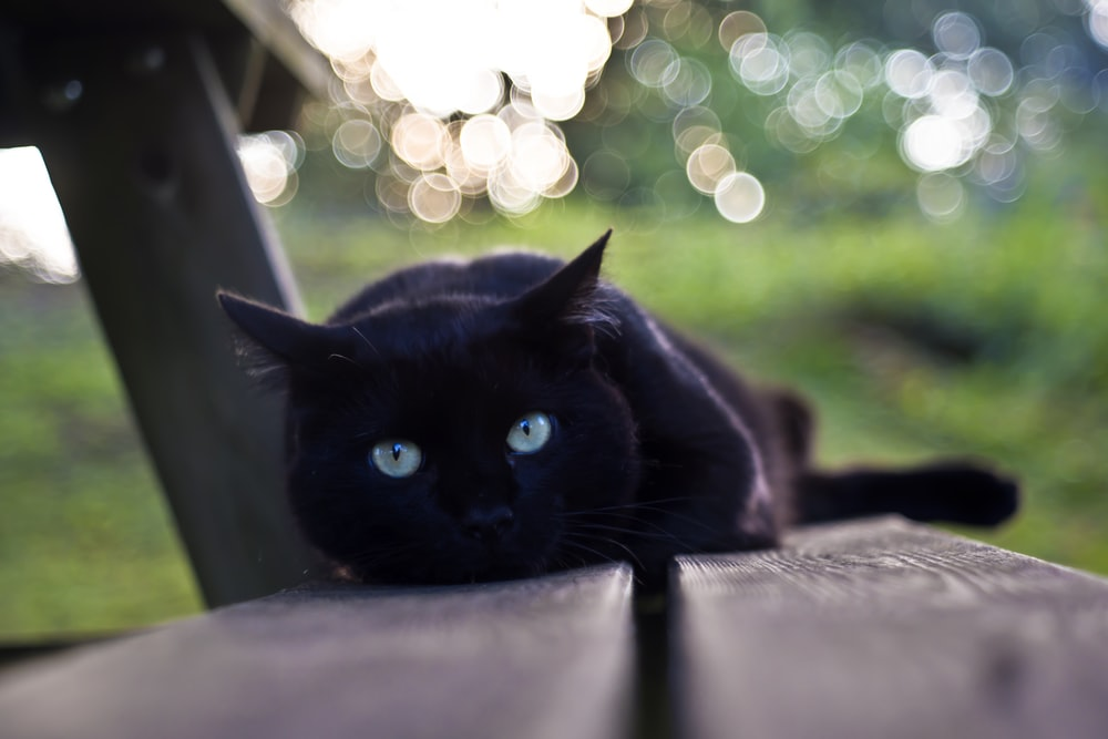 selective focus photography of black cat on bench