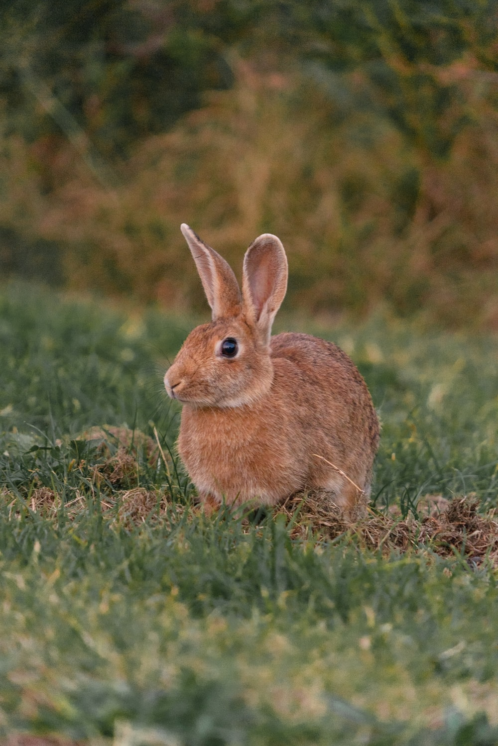 brown hare on grass field