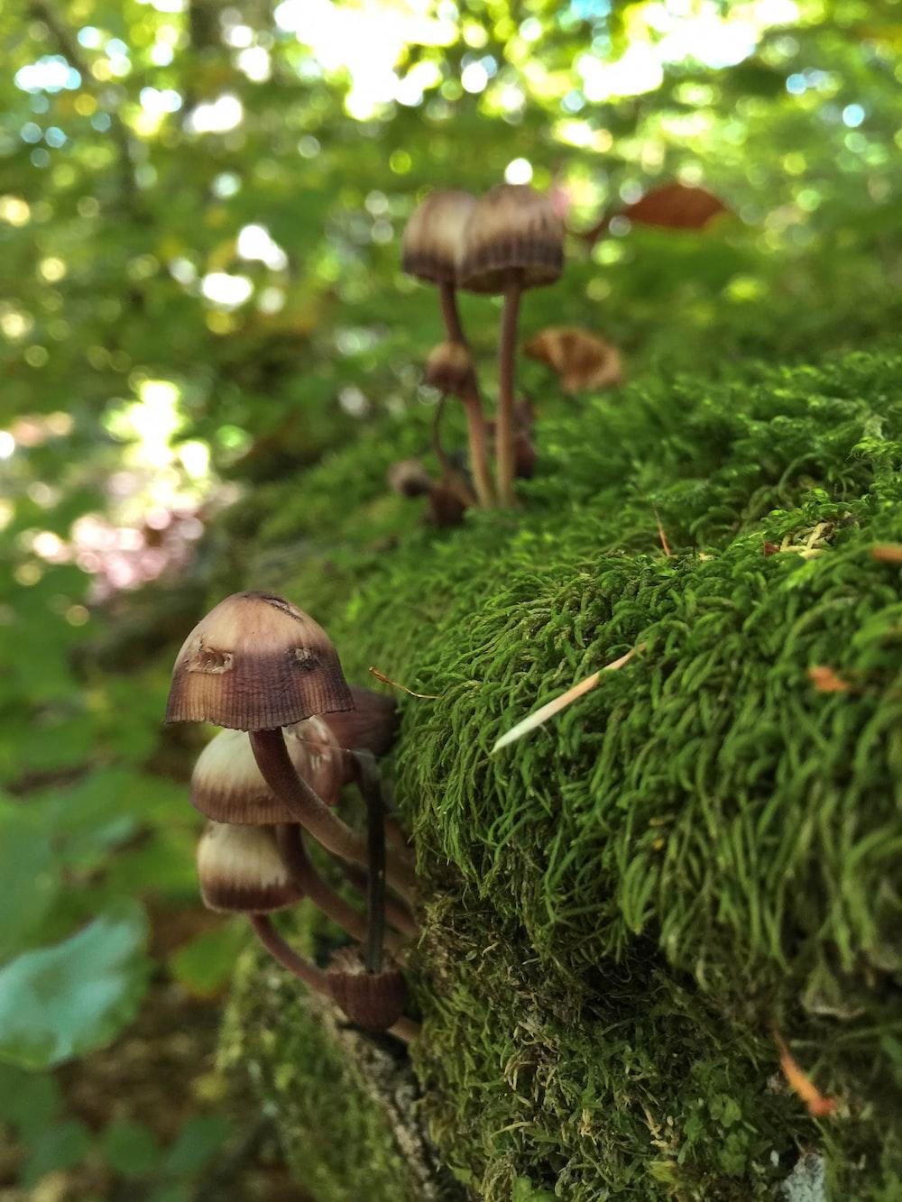 mushrooms on green plant