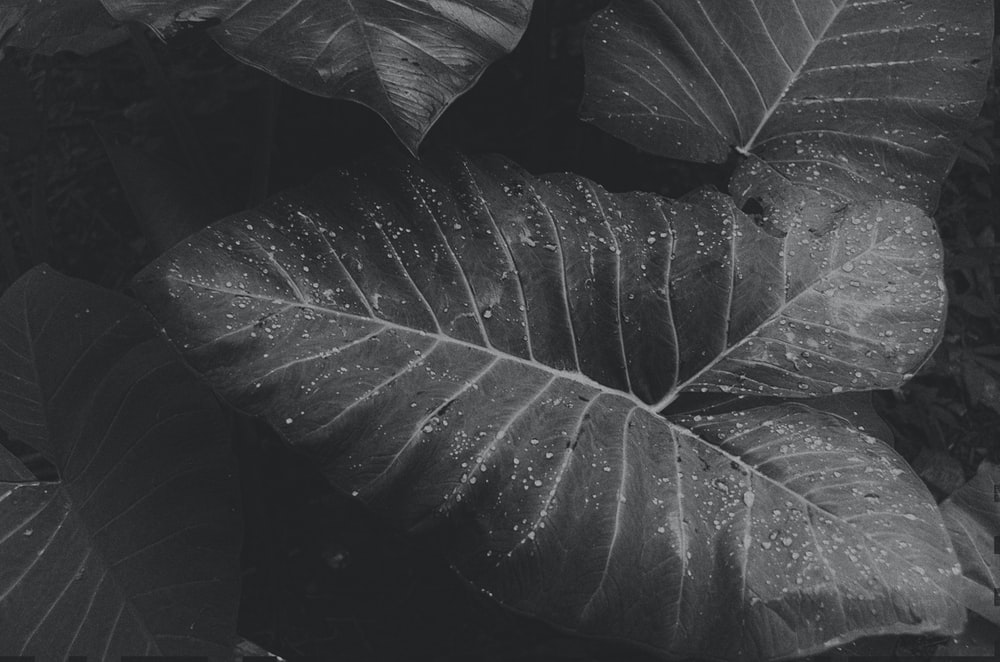 grayscale photography of water drops on plants