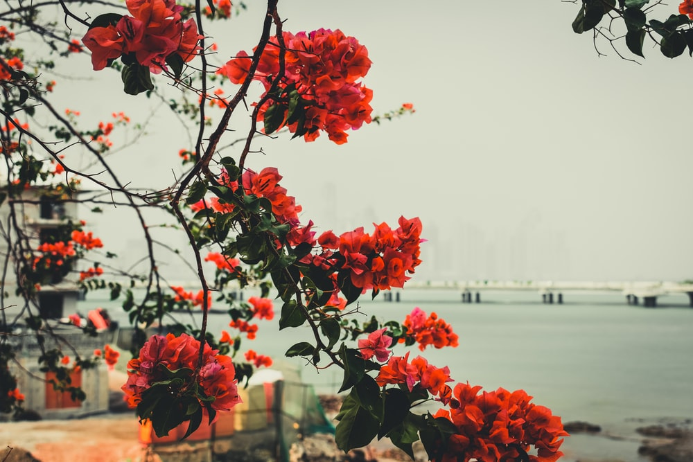 red-petaled tree beside sea during daytime