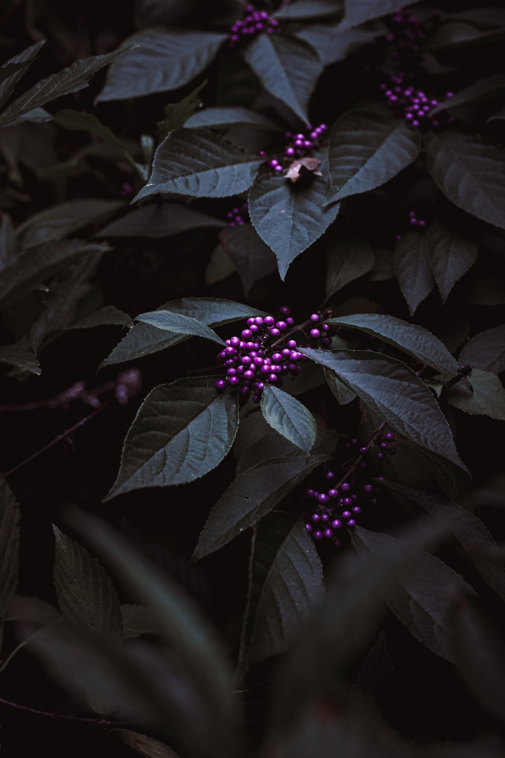 pink berries with green leaves