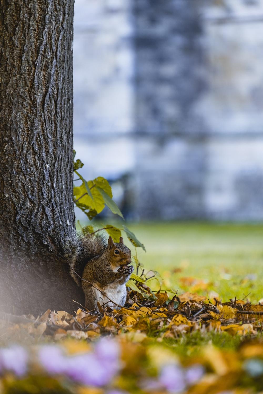 squirrel near tree