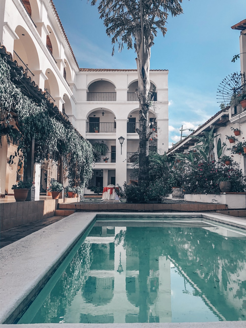 pool infront of palm tree