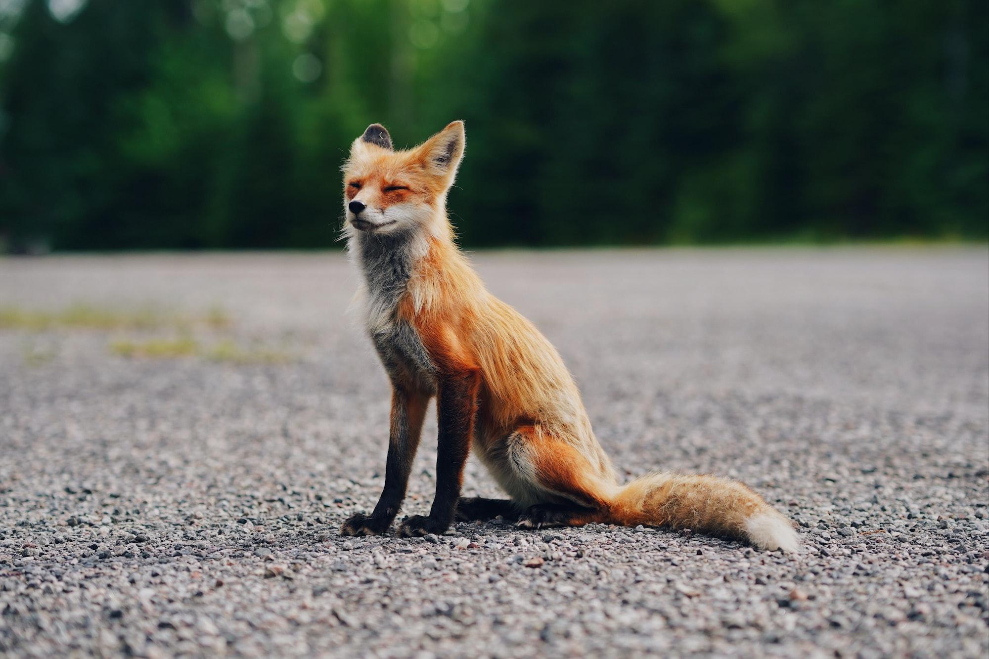 Designing the Foxie Language