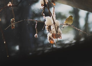 small-beaked yellow bird
