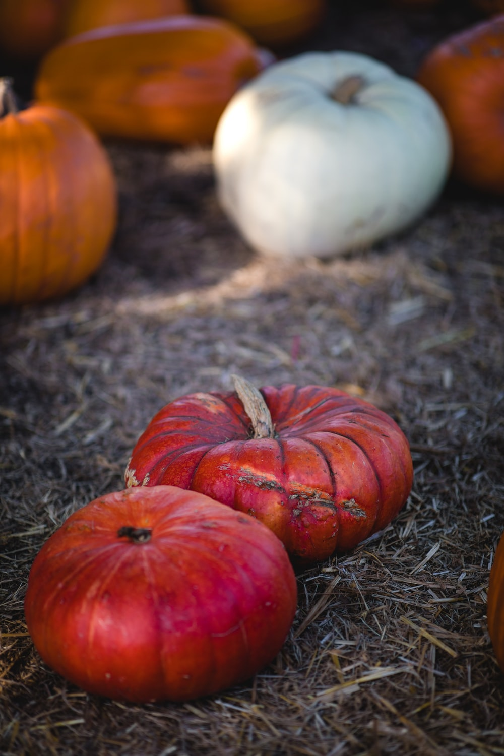 red, white, and orange pumpkins