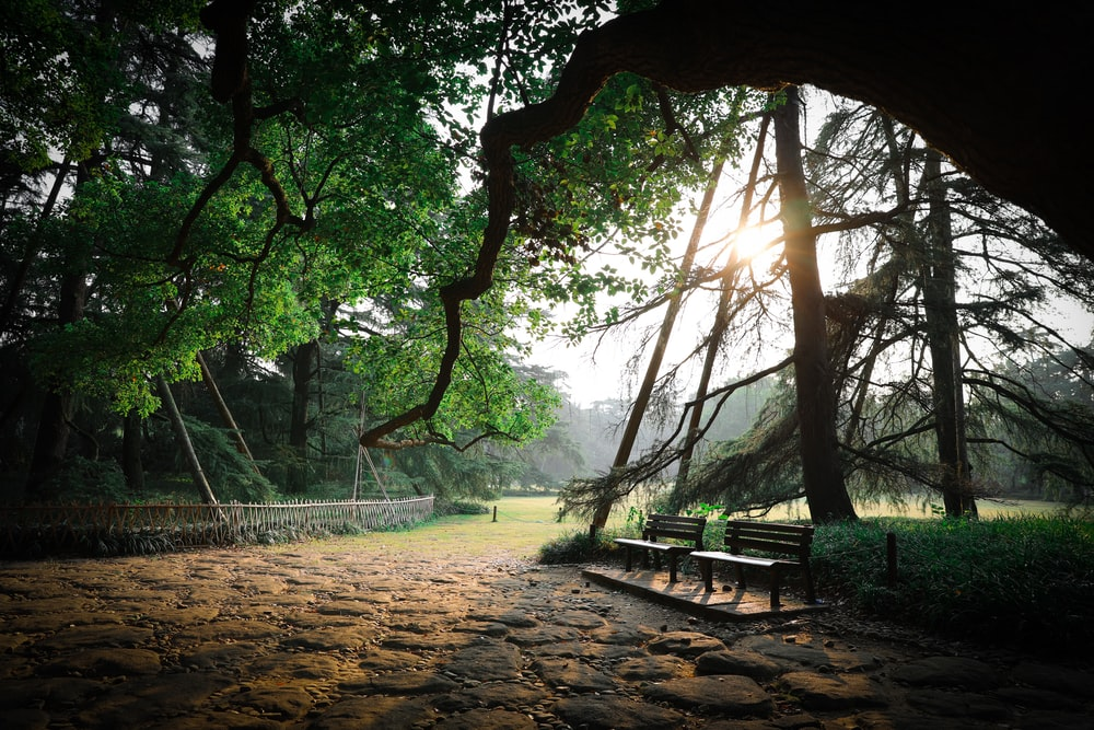 benches under tree
