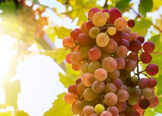 view of grapes fruit