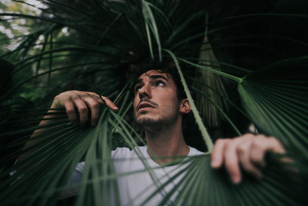 Man Holding Green Leafed Plant Photo Free Vegetation Image On