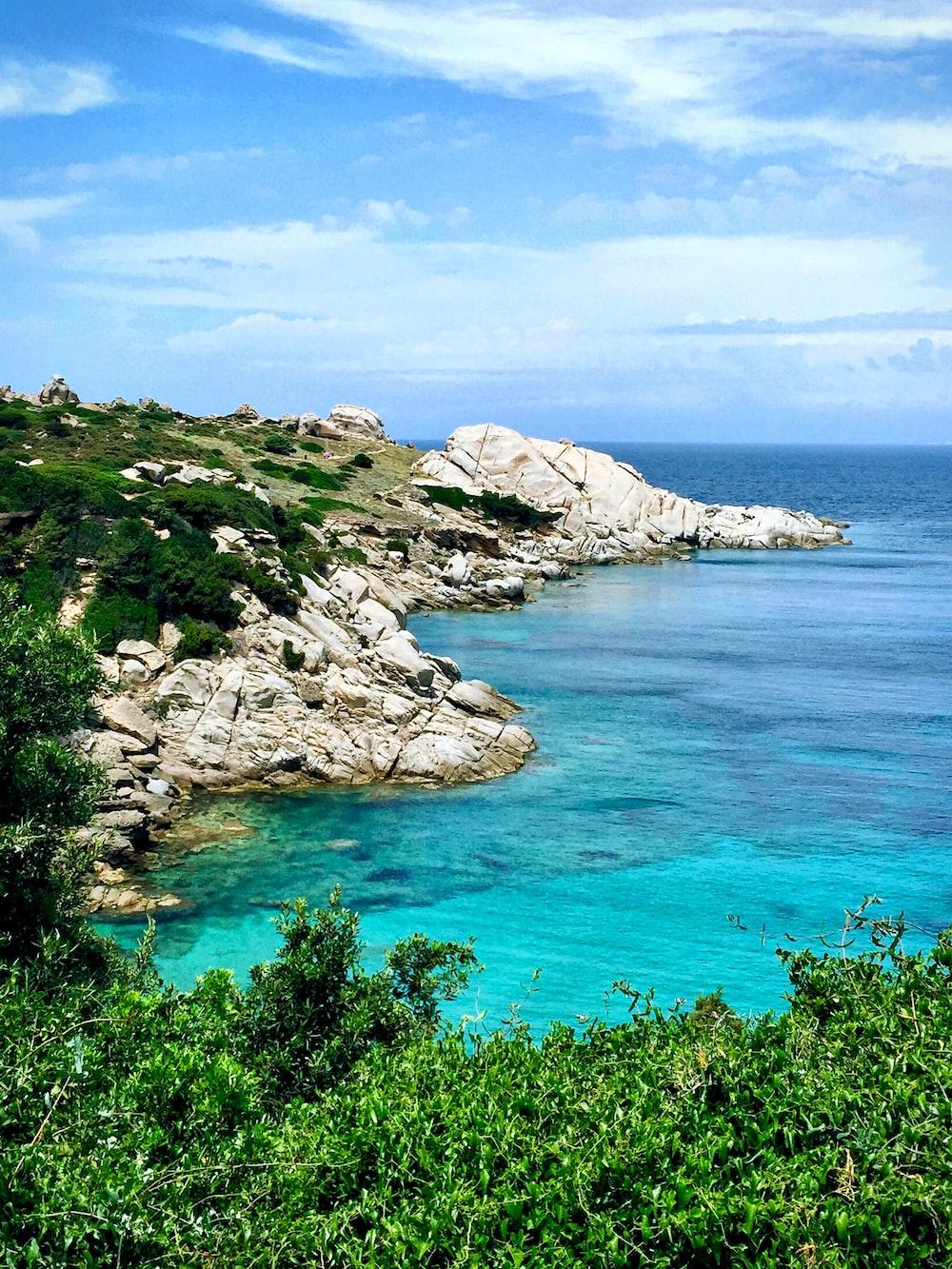 white rocky seashore with green vegetation during daytime