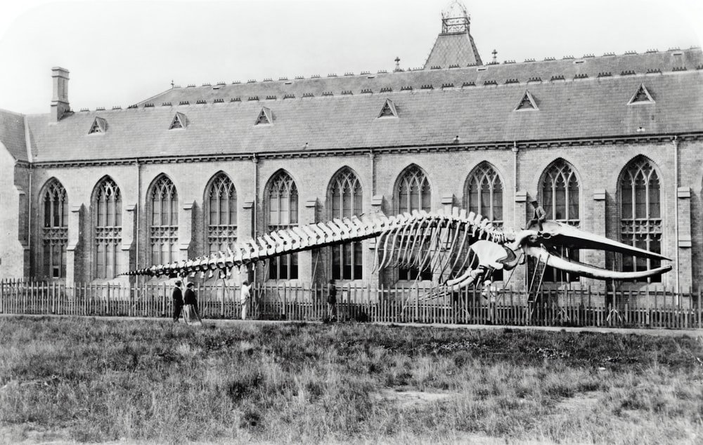 grayscale photo of skeleton
