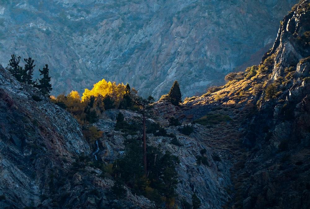 trees on mountain during daytime