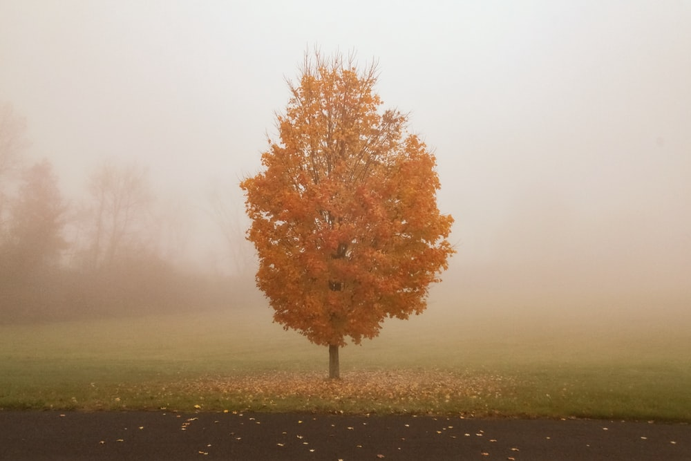 brown-leafed tree during daytime