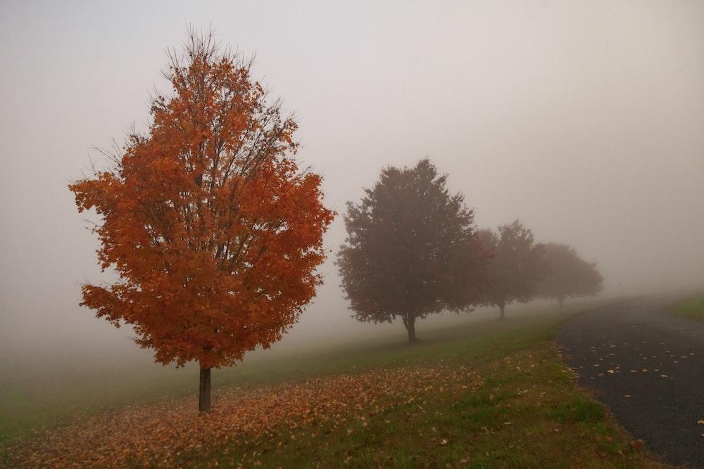 orange leafy tree