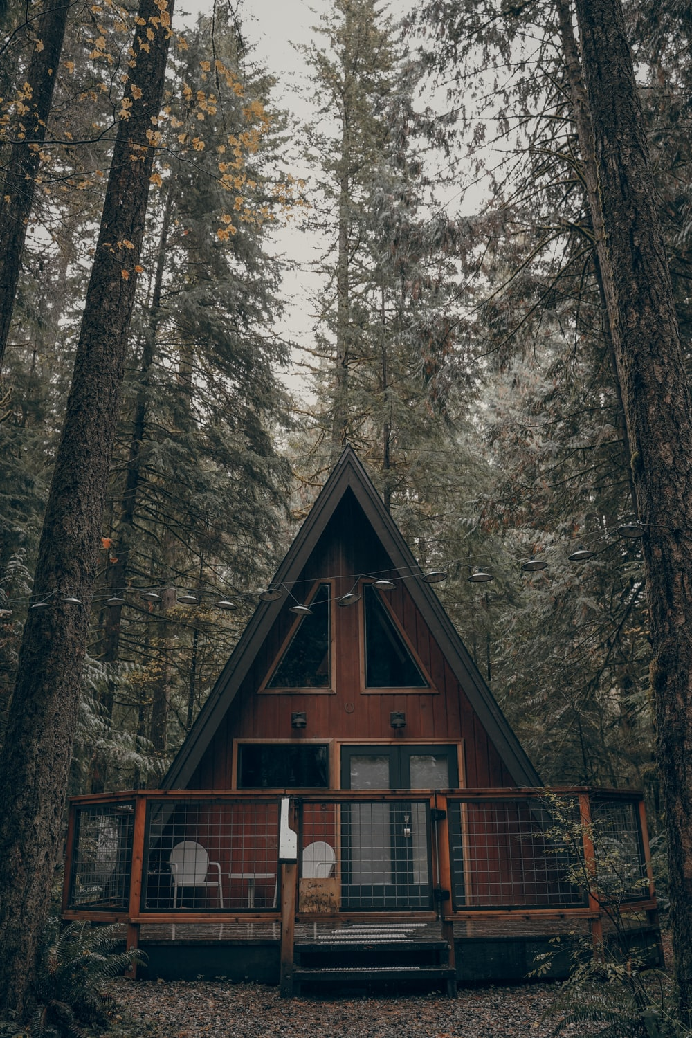 brown wooden cabin surrounded by trees