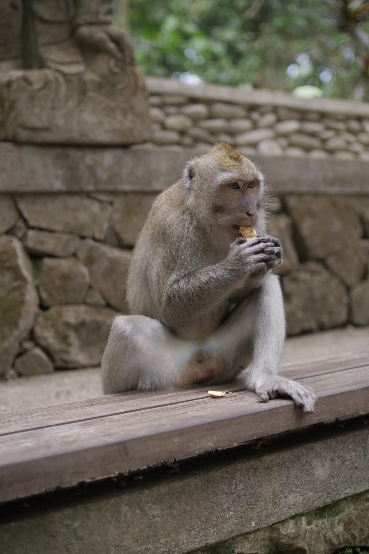 grey monkey during daytime