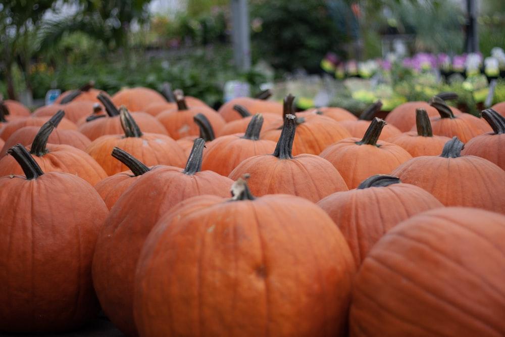 orange and black pumpkin lot