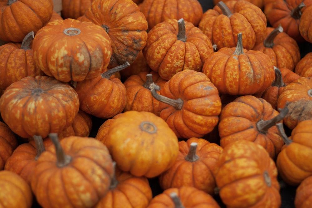orange and green pumpkin lot