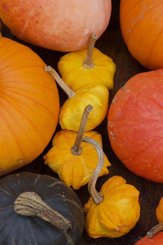 orange and yellow pumpkin and pumpkin