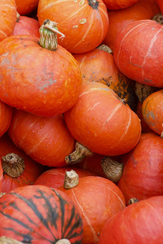 orange and orange pumpkin lot