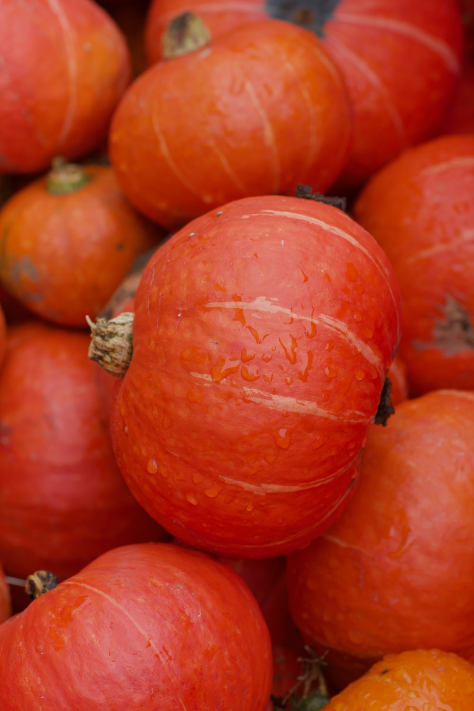 orange and orange pumpkin fruits