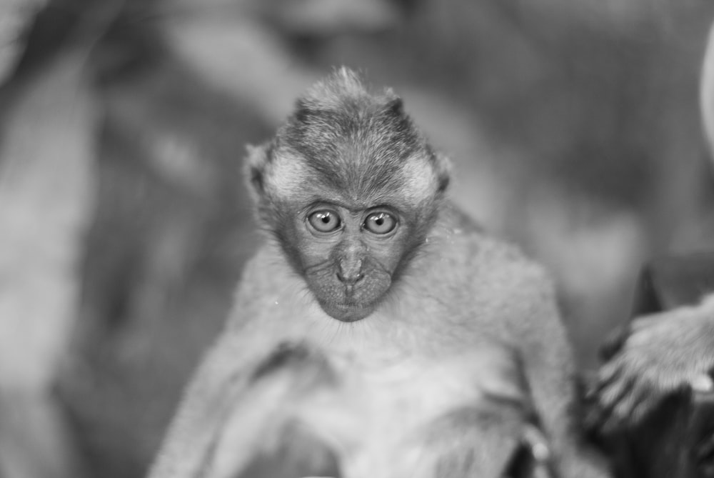 primate sitting on ground