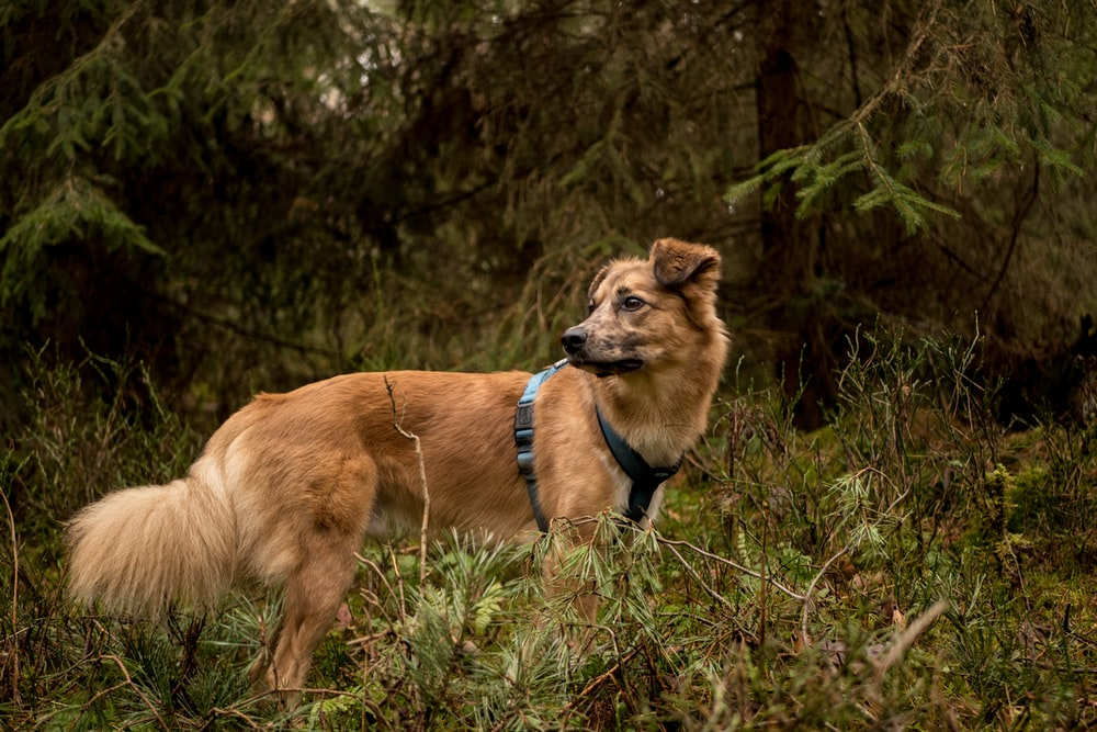 leashed dog in forest