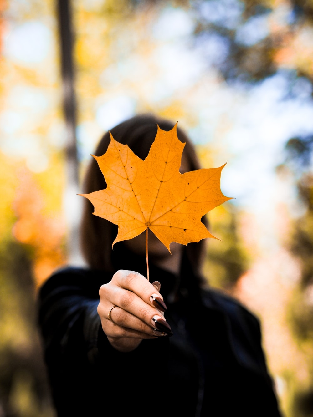 shallow focus photo of person holding orange maple leaf