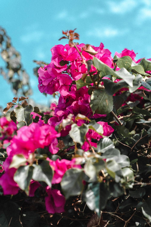 shallow focus photo of purple flowers