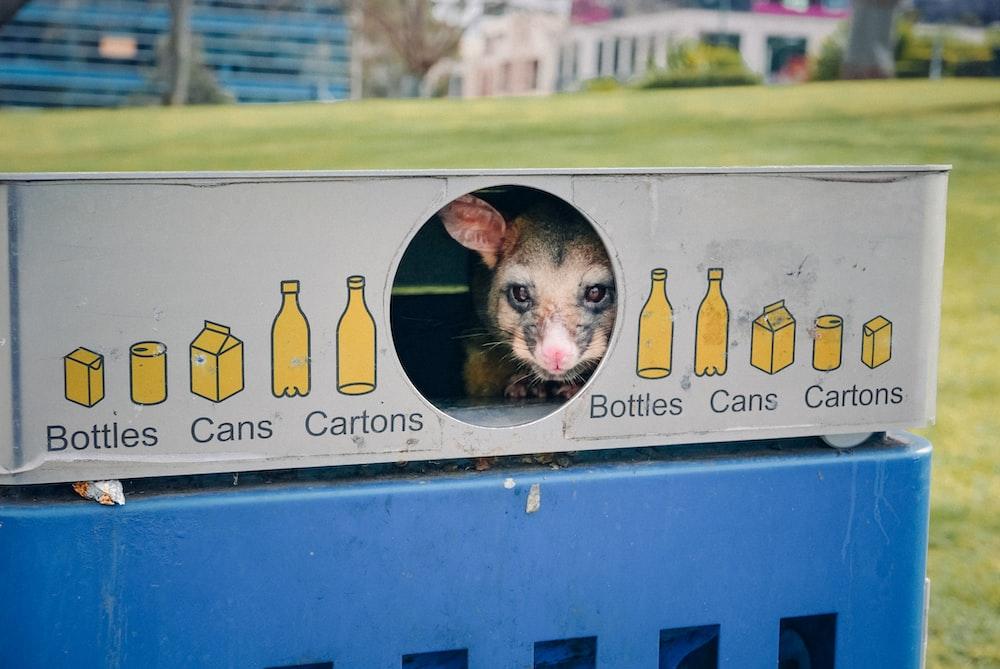 在澳洲如何扔大件垃圾