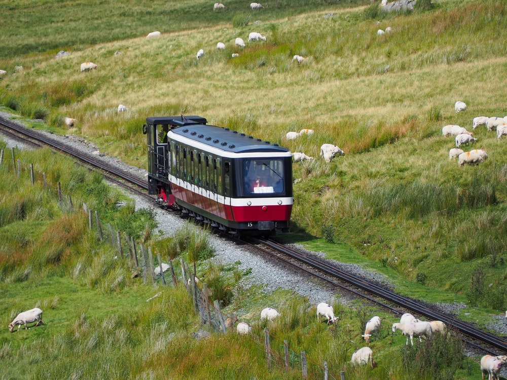 black and red train between grass field