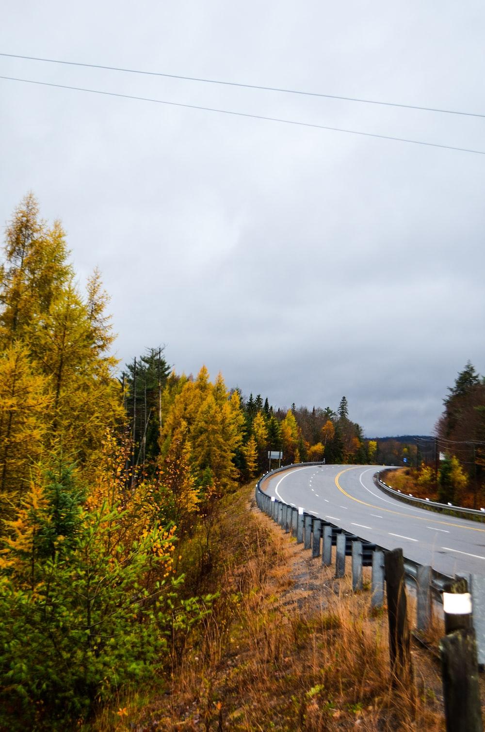 road beside trees