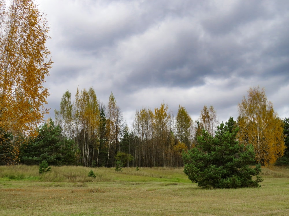green grass field and trees