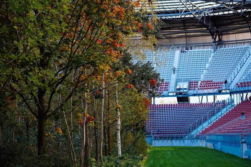 green trees beside stadium chairs