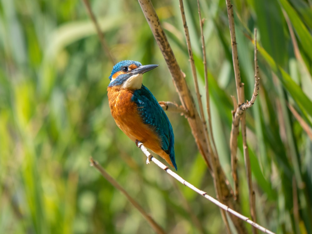 blue and brown bird with green bird