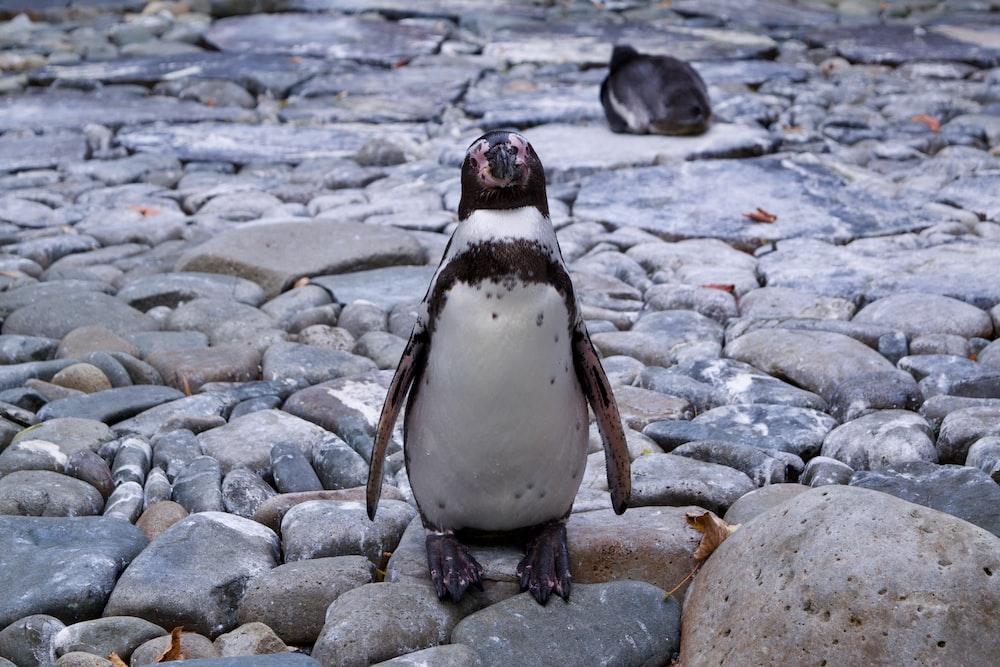 white and black penguin plush toy
