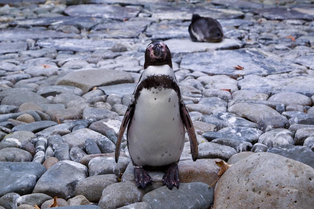 Photo of a penguin in captivity, Prague Zoo, Czechia